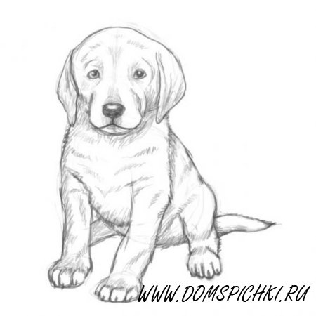 Как поэтапно нарисовать красивого щенка